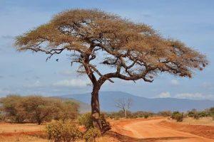 cestovní pojištění do afriky