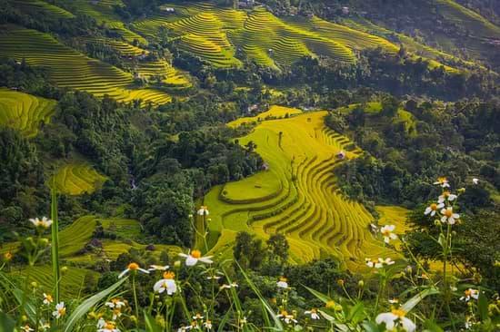 cestovní pojištění vietnam