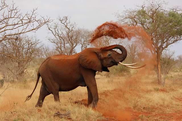 pojištění keňa