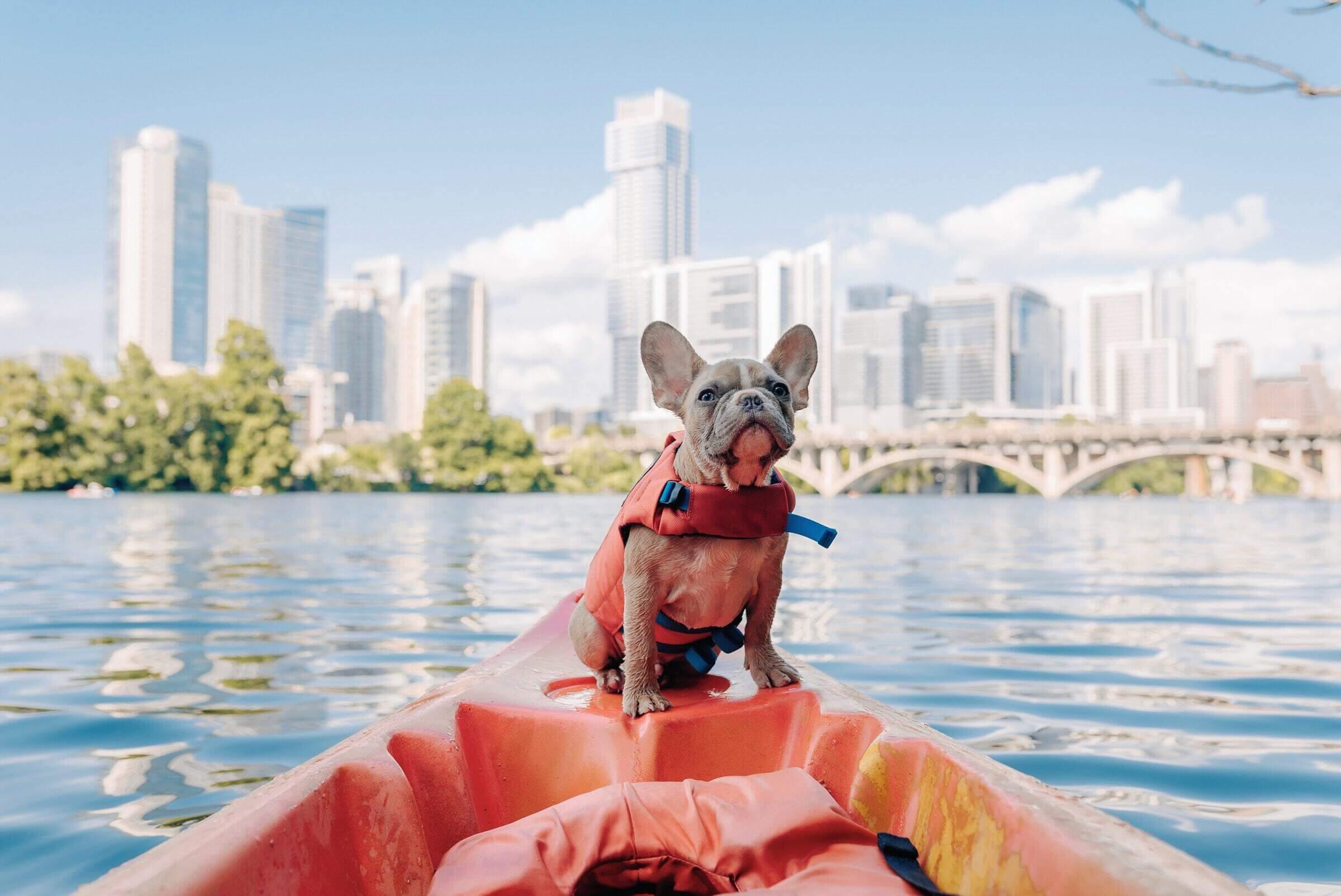 cestovní pojištění pes